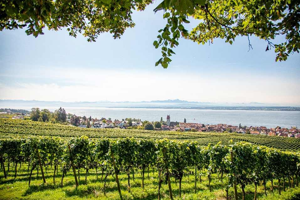 der-seewein-hagnauer-weine-bodensee-panorama