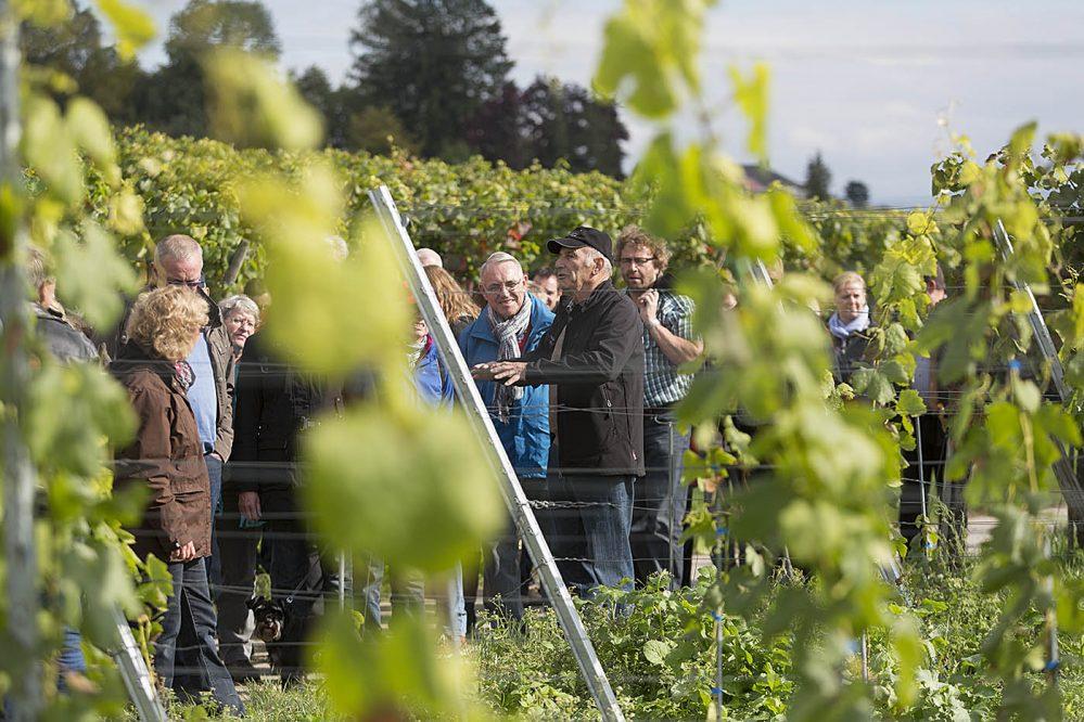 Weinrundgang in Hagnau